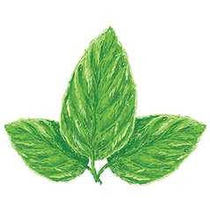 Unique style of fresh basil leaves ocimum vector
