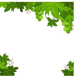 white grapes with branches and leaves background vector image