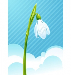 White snowdrop vector