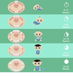 Baby teething chart vector