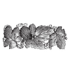 Brooch pinned to a garment vintage engraving vector