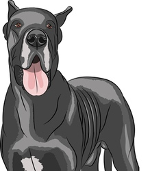 Great Dane a vector image