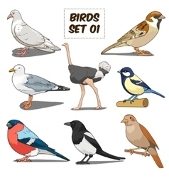Bird set cartoon colorful vector