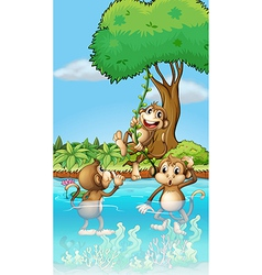 Cartoon Playing Monkeys vector image vector image