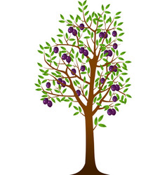 Plum tree vector