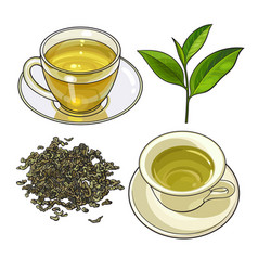 Green tea cup fresh and dry leaves vector