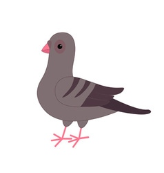 Gray pigeon dove bird cute cartoon character on vector