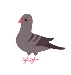 Gray Pigeon Dove bird Cute cartoon character on vector image vector image