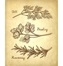 herbs set on old paper background vector image vector image
