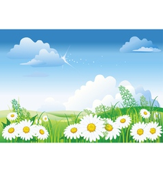 Chamomile on blue sky vector