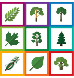 Flat icon bio set of tree linden oaken and other vector