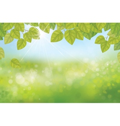 Leaves spring background vector