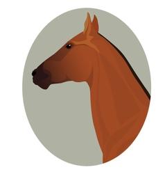 Golden akhal-teke stallion portrait in the frame vector