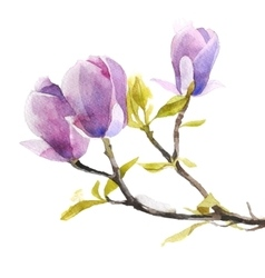 Watercolor magnolia flowers vector image