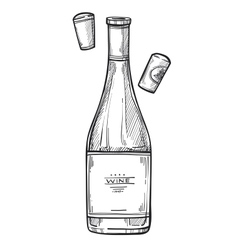 Bottle of wine freehand pencil drawing vector image