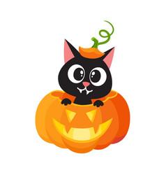 flat cat sitting at big scary pumpkin vector image