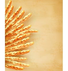 Ears of wheat on old paper background vector
