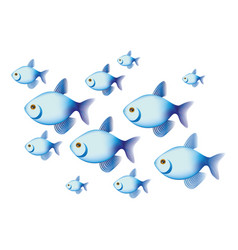 Colorful set collection fish aquatic animal vector