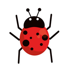 ladybug fly antenna animal vector image
