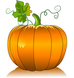 pumpkin in the garden vector image