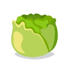Cabbage icon in flat style Isolated object vector image vector image