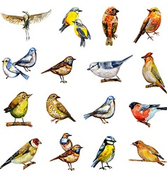 collection of birds watercolor painting vector image vector image