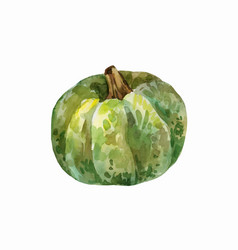 Green watercolor pumpkin vector