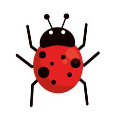 ladybug fly antenna animal vector image