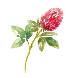 Red watercolor clover field vector