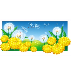 Meadow with dandelions vector