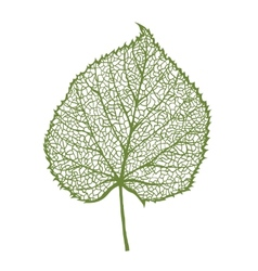 Linden leaf isolated on white background vector