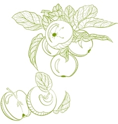 Monochrome drawing apples and apple branch vector