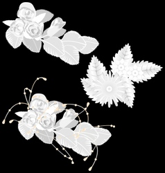 White flowers isolated on black vector image