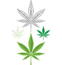 Cannabis marijuana leaf vector