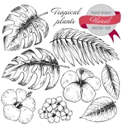 Set of black and white hand drawn graphic tropical vector