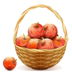Wicker basket full of red apples vector image