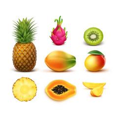 Set of tropical fruits vector