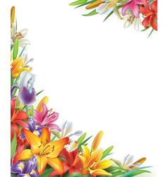 Frame with iris and lilies flowers vector