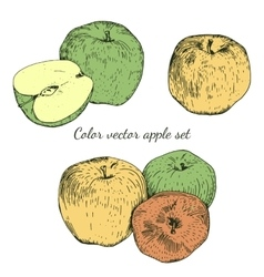 Color apple sketches set vector image