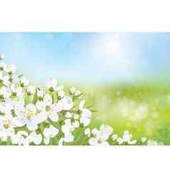 Spring nature blossom tree vector