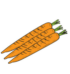 Group of carrots vector