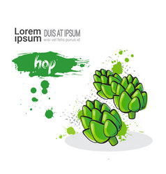 hop hand drawn watercolor vegetables on white vector image vector image