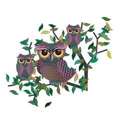 Owls on a branch vector