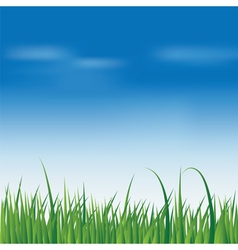 fresh green grass over blue sky vector image
