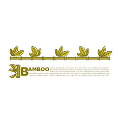 bamboo poster design of tropical palm leaf vector image