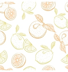 drawing pattern of citrus orange and lemon vector image
