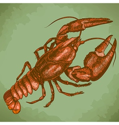 Engraving crayfish retro vector