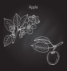Hand drawing apple tree branch vector