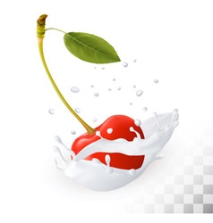 Red cherry in a milk splash on a transparent vector