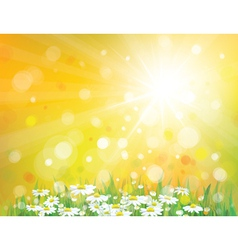 Spring sunny background vector